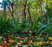 Pavimento del terreno boscoso Immagini Stock