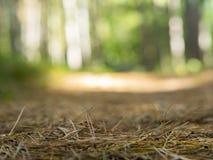 Pavimento del terreno boscoso della foresta Fotografia Stock