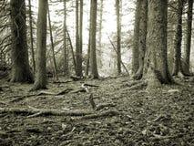 Pavimento della foresta Immagini Stock Libere da Diritti