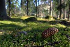 Pavimento della foresta Immagine Stock