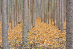 Pavimento della foresta coperto di leves con i colori di caduta Fotografia Stock Libera da Diritti