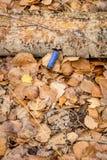 Pavimento della foresta nella caduta con una cartuccia per fucili a canna liscia blu Immagine Stock Libera da Diritti