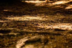 Pavimento di Autumn Forest fotografia stock libera da diritti
