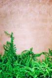 Pavimento di calcestruzzo con le foglie verdi Fotografia Stock