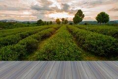 Pavimento di legno d'apertura, piantagione di tè a nord della Tailandia Immagini Stock