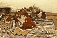 Pavimento di legno decomposto tramite la putrefazione a secco immagini stock