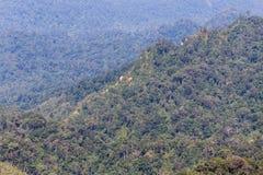 Pavimento di legno del terrazzo del balcone sull'alta montagna tropicale di punto di vista della foresta pluviale Fotografie Stock Libere da Diritti