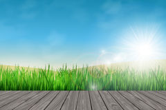 Pavimento di legno ed erba verde fresca Fotografie Stock Libere da Diritti