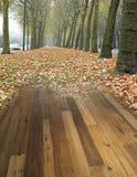 Pavimento di legno sul backg della foresta Fotografia Stock Libera da Diritti