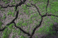 Pavimento di terra Immagine Stock