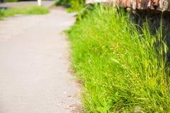 Pavimento do asfalto A grama verde cresce no lado da estrada Dia de ver?o, o sol est? brilhando imagem de stock