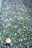 Pavimento do cascalho coberto com a textura do musgo Fotografia de Stock