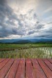 pavimento e risaie di legno del terrazzo di agricoltura di Blured sulla m. Fotografie Stock Libere da Diritti