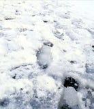 Pavimento escorregadiço do gelo da parada do ônibus fotografia de stock royalty free