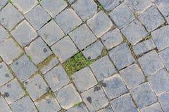 Pavimento grigio del mattone nella forma della curva Fotografia Stock