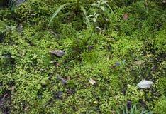 Pavimento muscoso della foresta fotografia stock