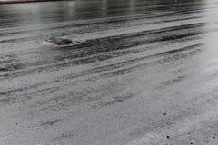 Pavimento negro recientemente puesto del asfalto del alquitrán Fotografía de archivo libre de regalías