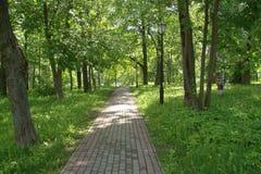 Pavimento no parque em um dia ensolarado entre as árvores e nos postes de luz velhos à direita imagens de stock royalty free