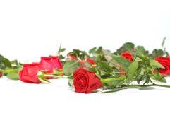 Pavimento in pieno delle rose immagini stock