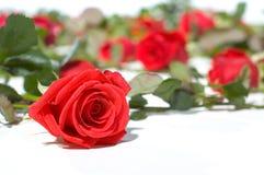 Pavimento in pieno delle rose Fotografia Stock Libera da Diritti
