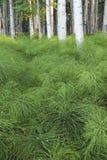 Pavimento verde della foresta Immagini Stock