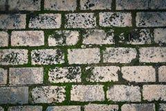 Pavimento verde do tijolo do musgo fotos de stock