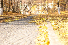 Paving at autumn. Yellow autumn leafs on old paving royalty free stock photos