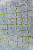 Paving blocks with moss can be used as background Royalty Free Stock Photo