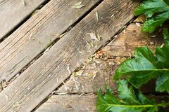 Paving from old boards with green leaves Stock Image