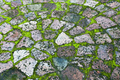 Paving with moss. In-between the bricks Royalty Free Stock Images