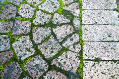 Paving with moss. In-between the bricks Royalty Free Stock Photo