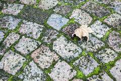 Paving with moss and a leaf. Paving with moss in between with a leaf Royalty Free Stock Image