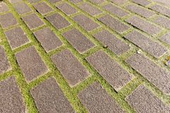 Paving with moss royalty free stock image