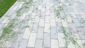 Cut grass on asphalt. On the paving slab is cut lawn grass stock video footage