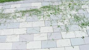 Cut grass on asphalt. On the paving slab is cut lawn grass stock video