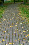 Tile ,track, sidewalk, street, styling, coating, pavement, paving. Paving slabs, driveway paving, coating colored paving tiles Stock Photos