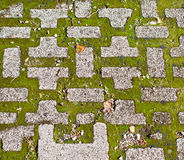 Paving slabs and grass. Royalty Free Stock Photo
