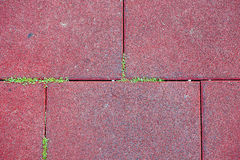 Paving slabs and grass. Stock Image