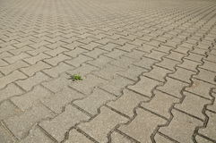 Paving slabs and a plantain. Royalty Free Stock Images