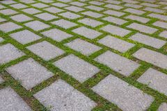 Paving-stone and green grass. At thailand stock photos