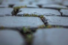Paving. Stone, masonry area, dvortsvaya area Royalty Free Stock Images