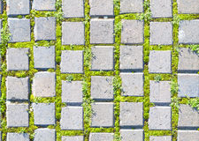 Paving stone style with grass seamless pattern Stock Photos