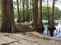Paving stones close-up trees in the water royalty free stock photo