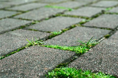 Paving stones with grass Stock Photo