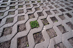 Paving stones with grass Royalty Free Stock Photo