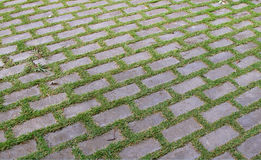Paving stones with grass Stock Photography