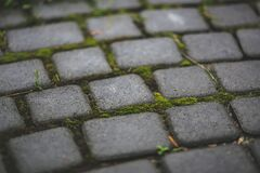 Paving stones with moss Royalty Free Stock Image