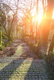 Paving stones road along the trees, Guimaraes, Portugal. Paving stones road along the trees at sunset, Guimaraes, Portugal Stock Image