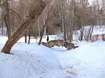 pavlovsk俄国 驼背的桥梁的看法通过Slavyanka河在冬日 免版税库存照片