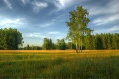 Pavlovsk公园,圣彼德堡,俄国 免版税库存照片